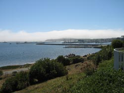 Pillar Point Harbor View